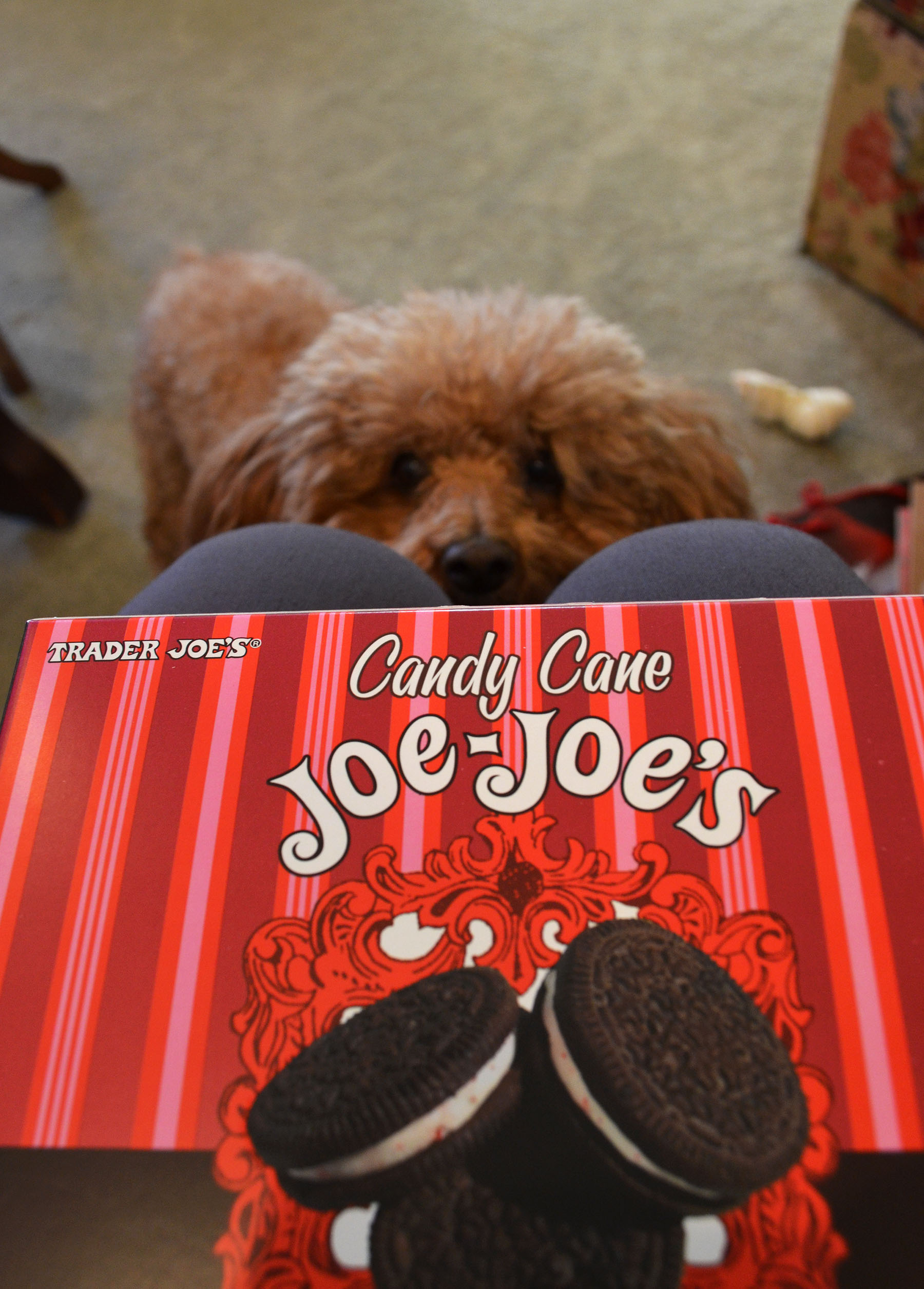Lucky Loves Joe-Joe's