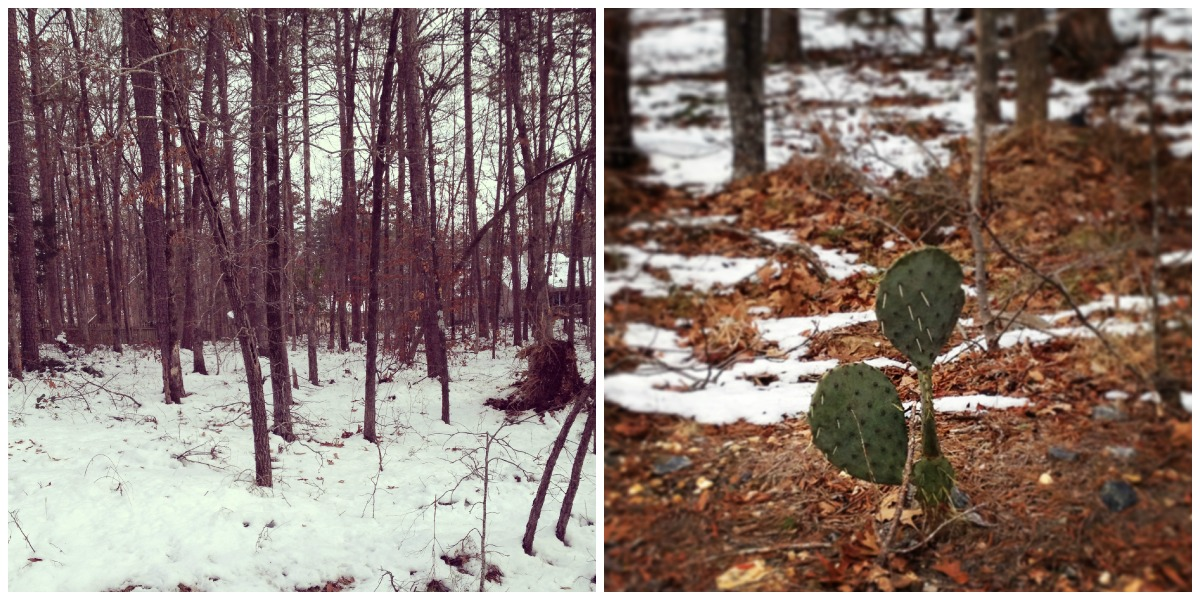 Snow and a Cactus