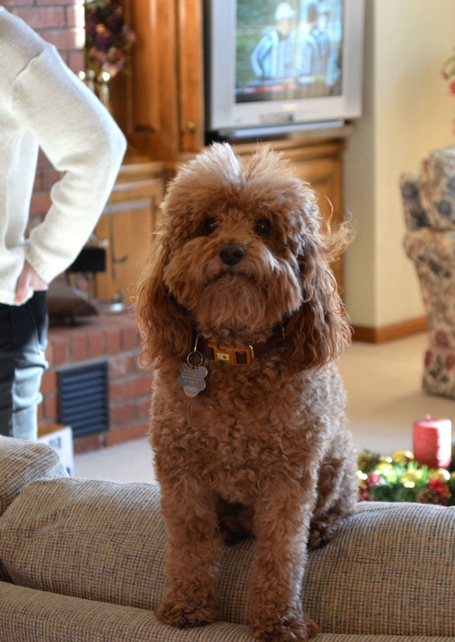 Begging to Open Presents