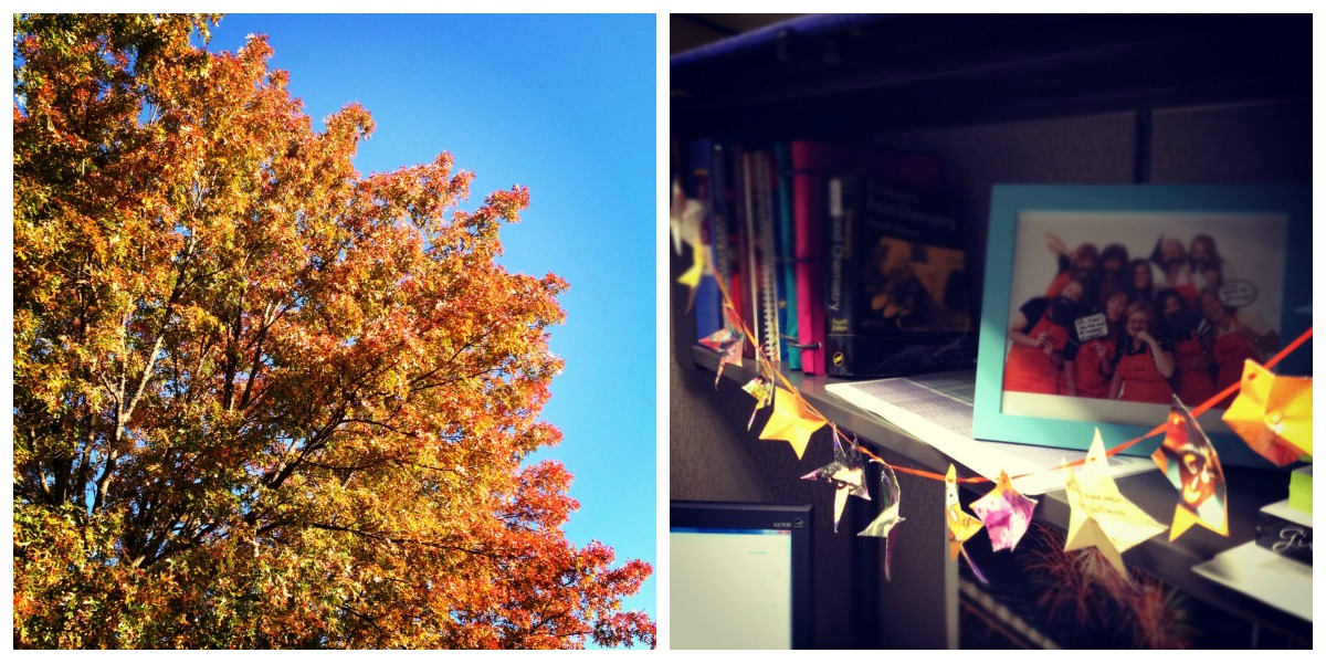 Fall at the Office