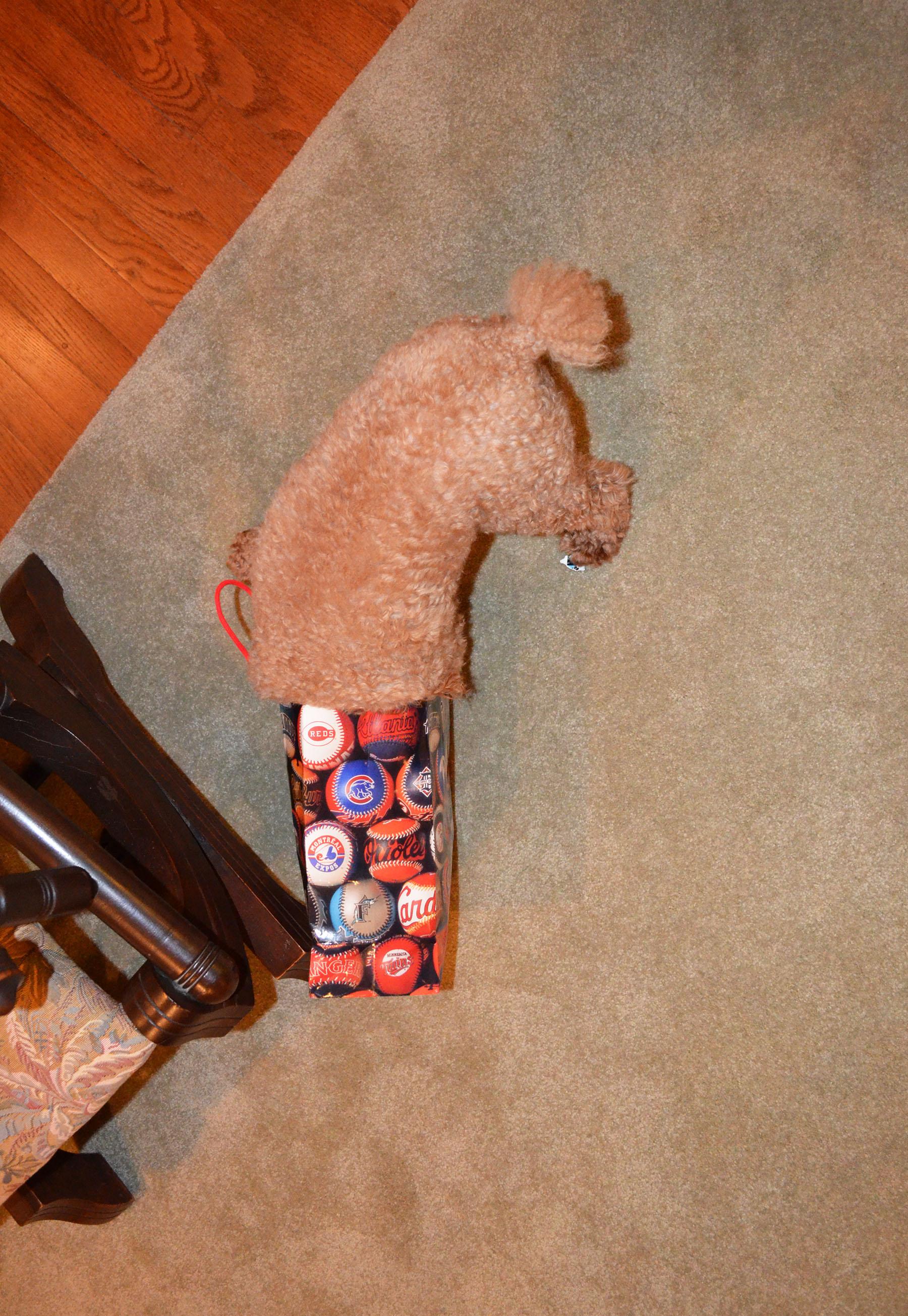 Silly Dog!