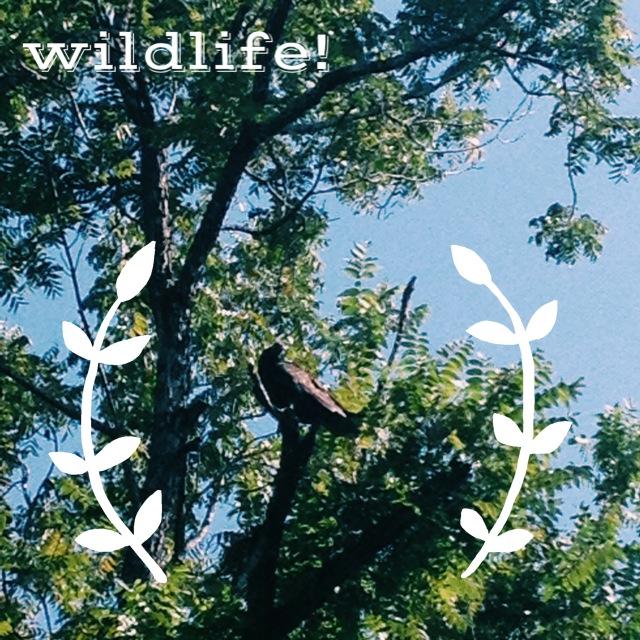 Wildlife!