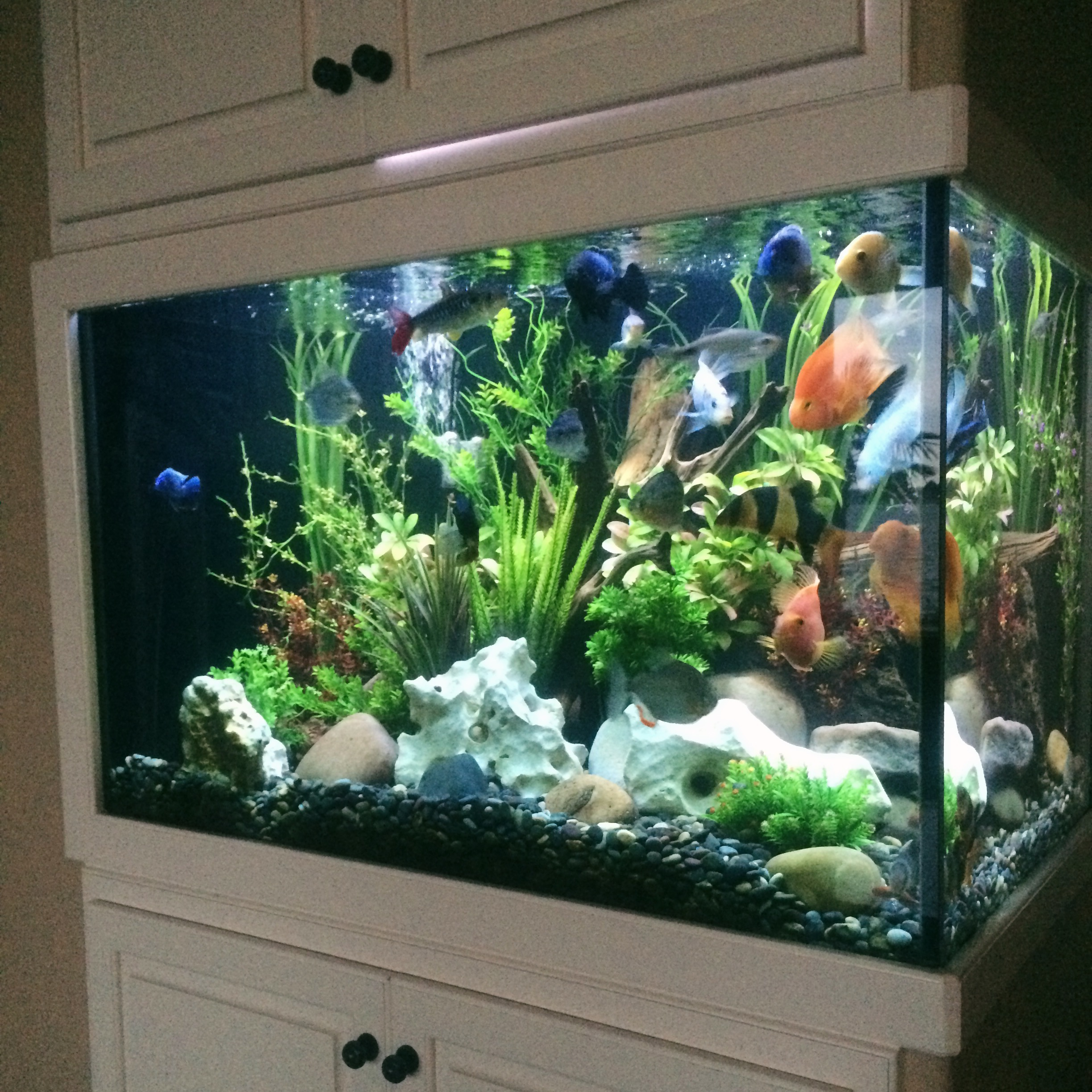 Built-In Fish Tank