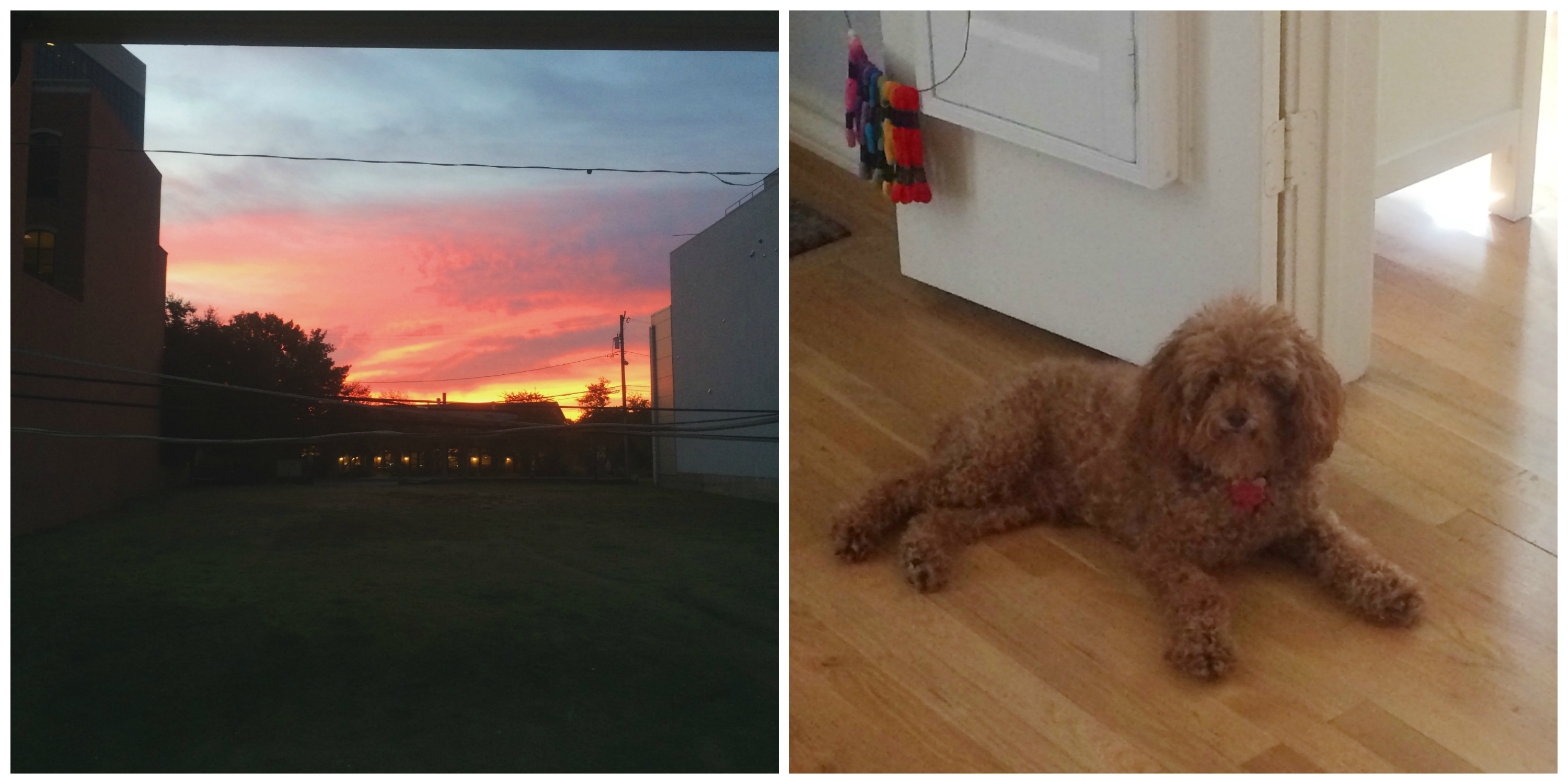Sunsets and Pups