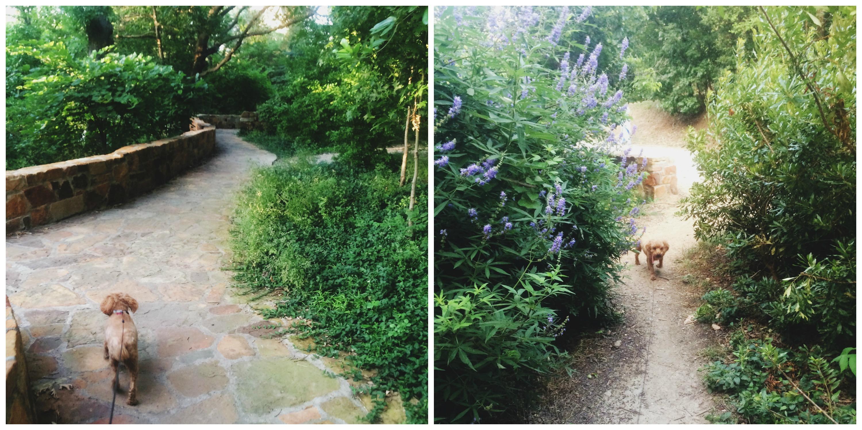 Katy Trail / Reverchon Park