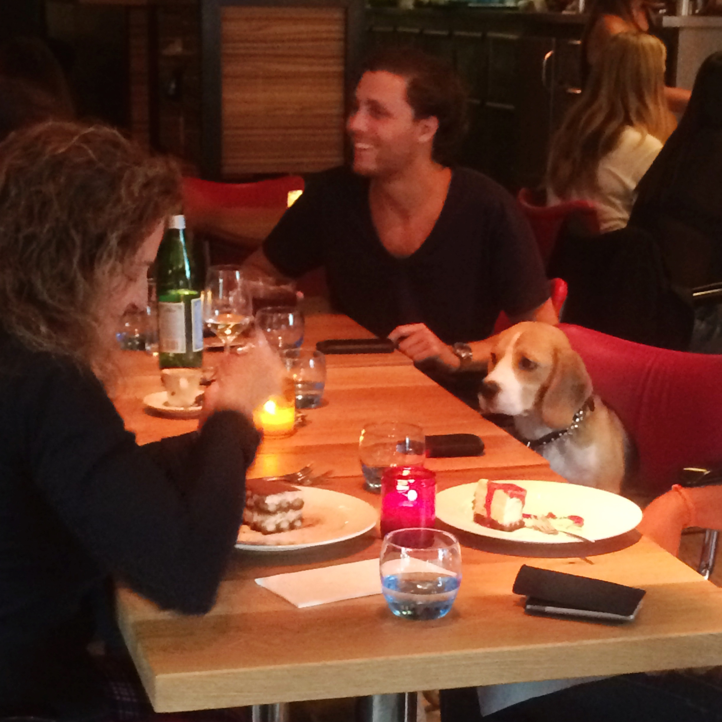 A Dog at the Restaurant