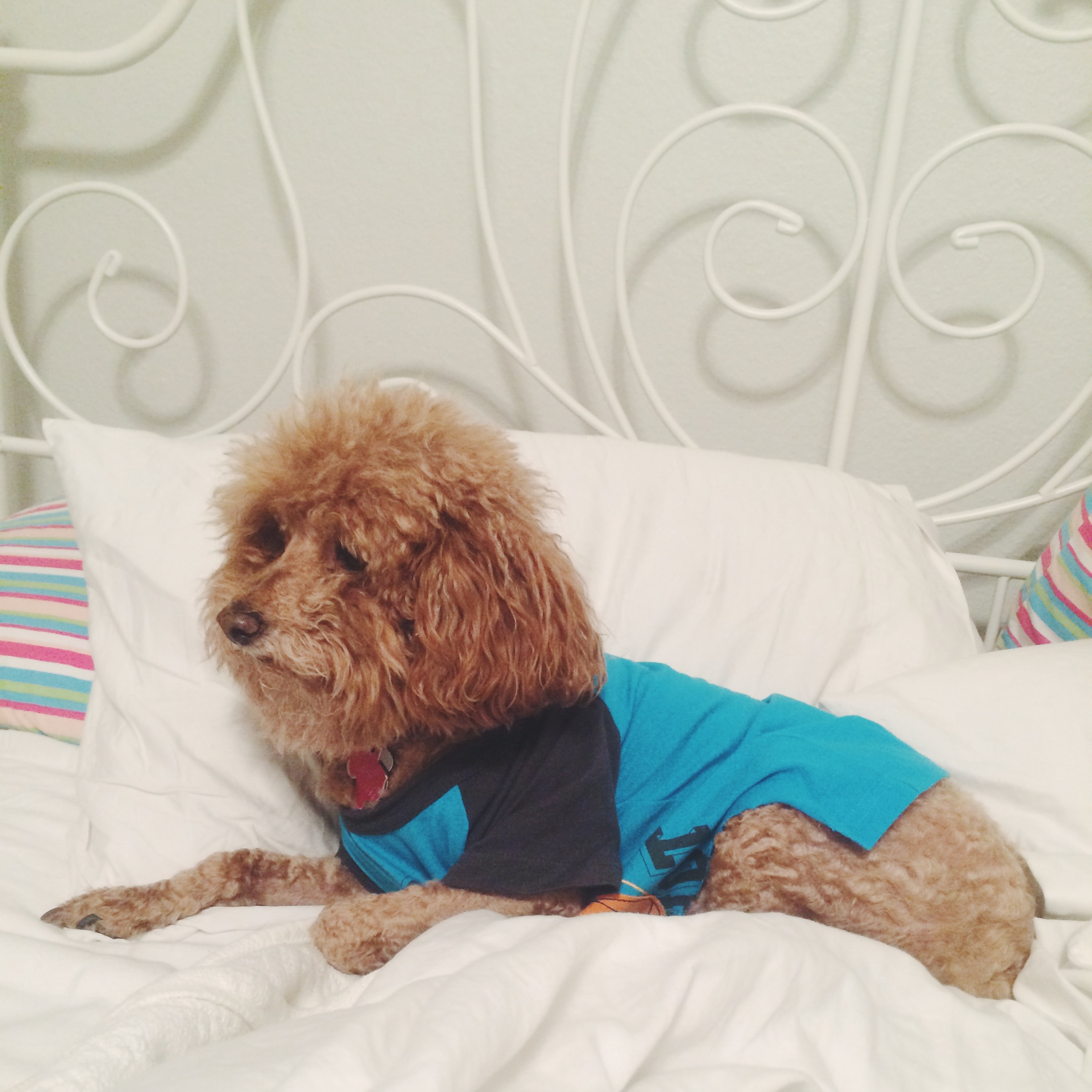 Lucky Dog in His T-Shirt