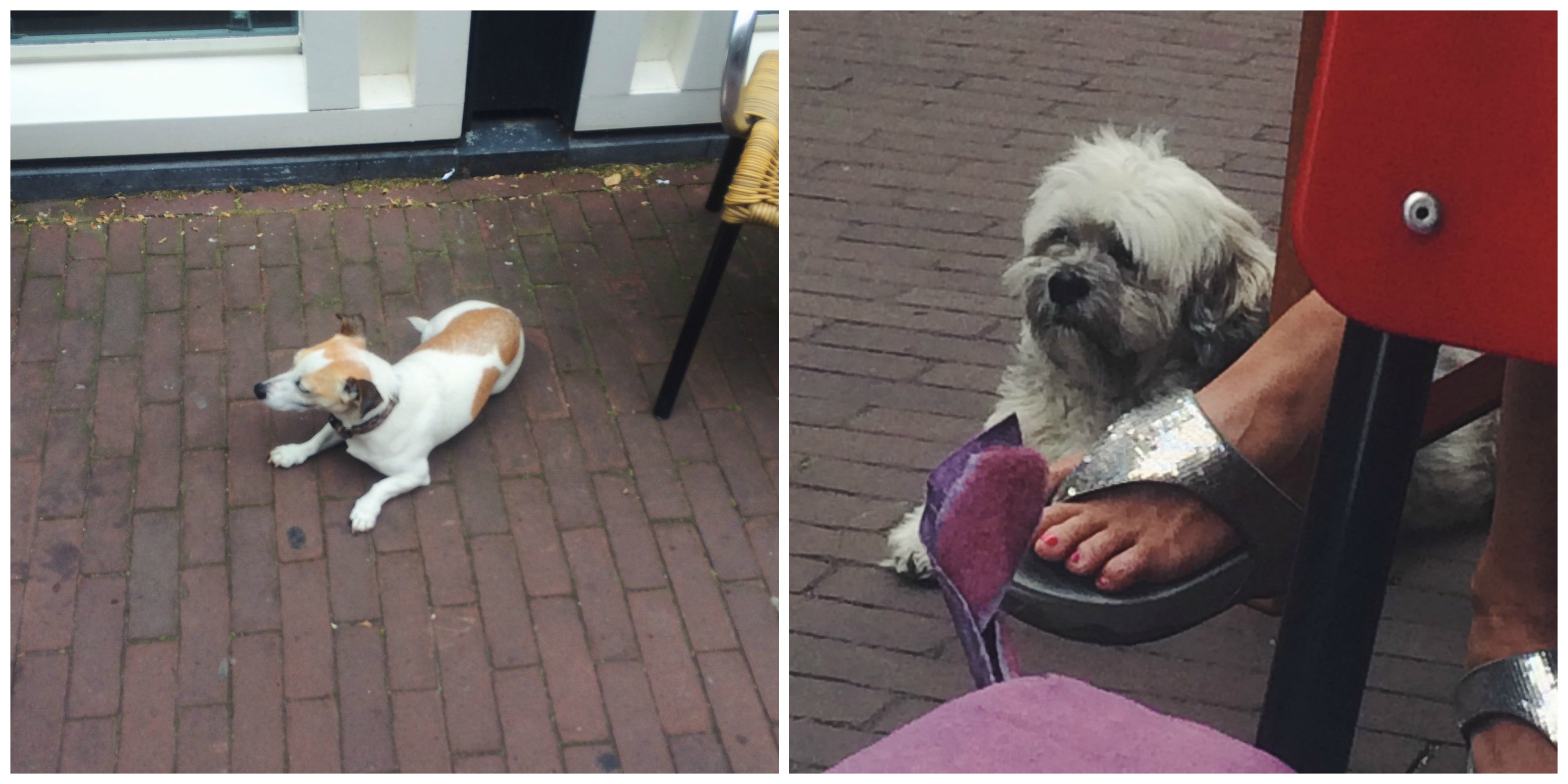 Dogs of Amsterdam