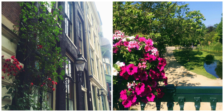 Cute Amsterdam