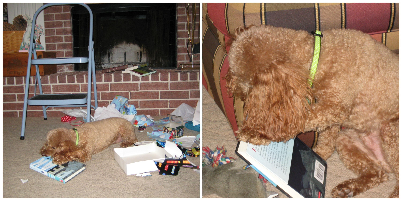 He Loved Books!