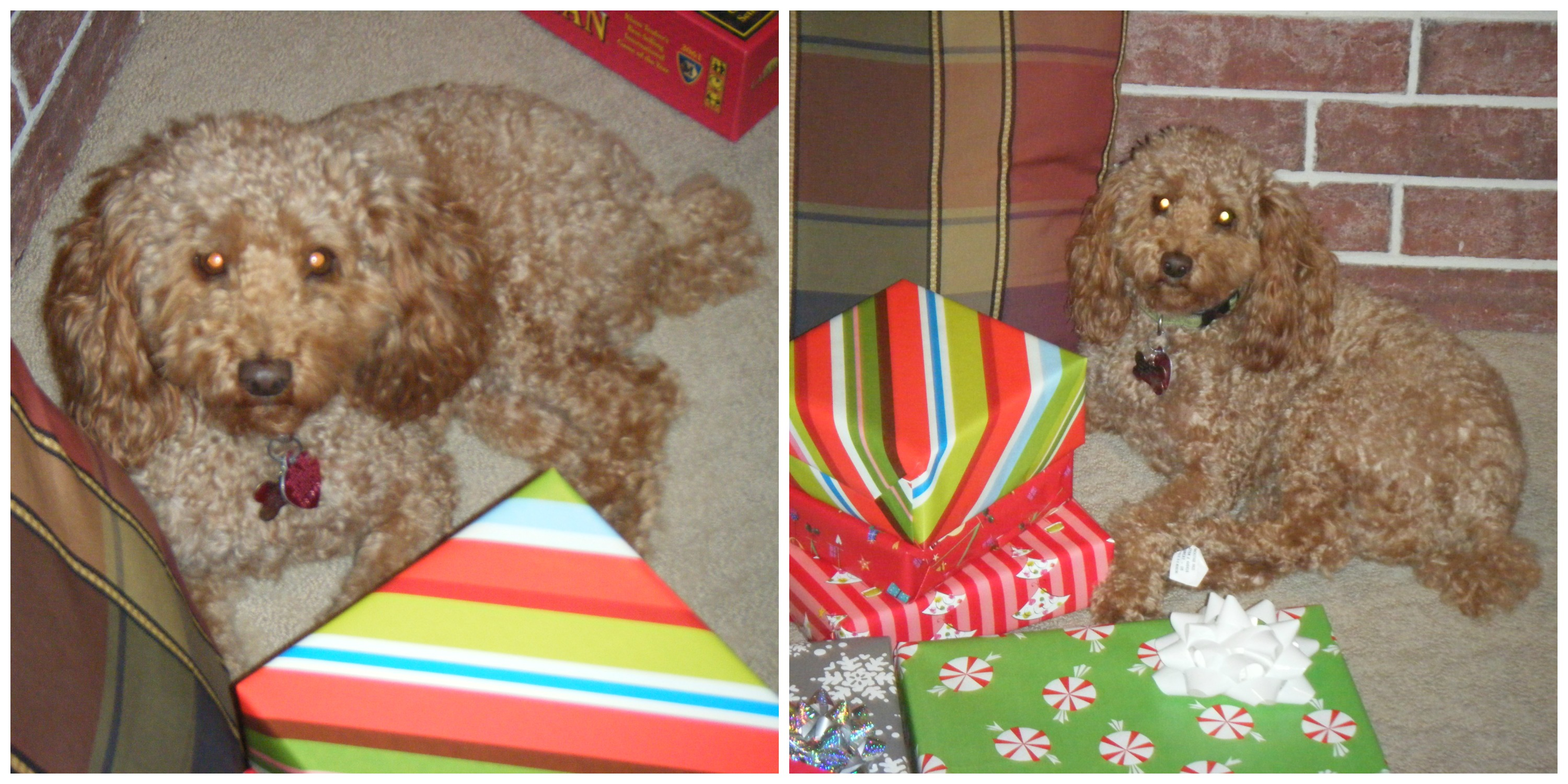 Lucky Loves Presents
