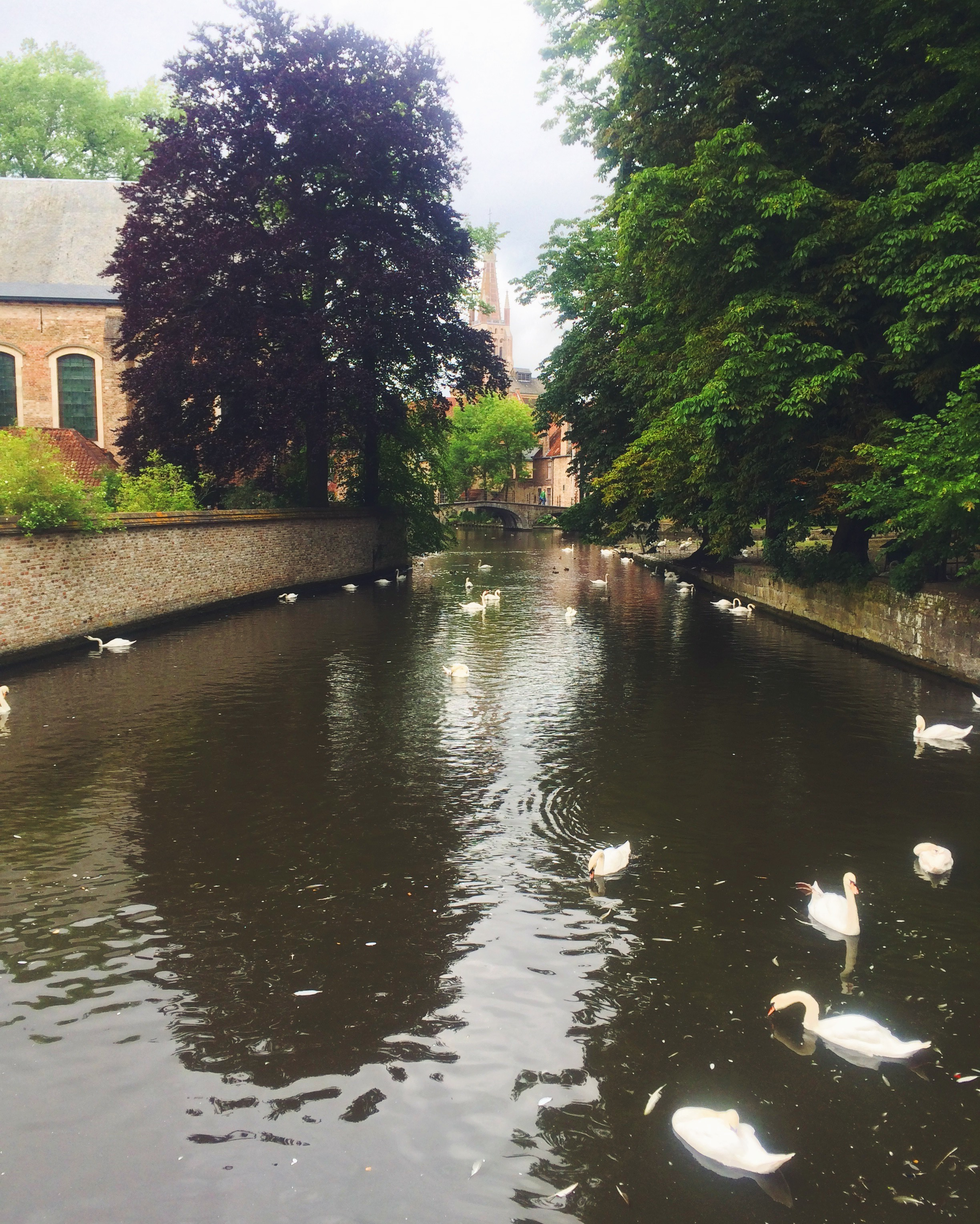 Canals and Swans in Bruges
