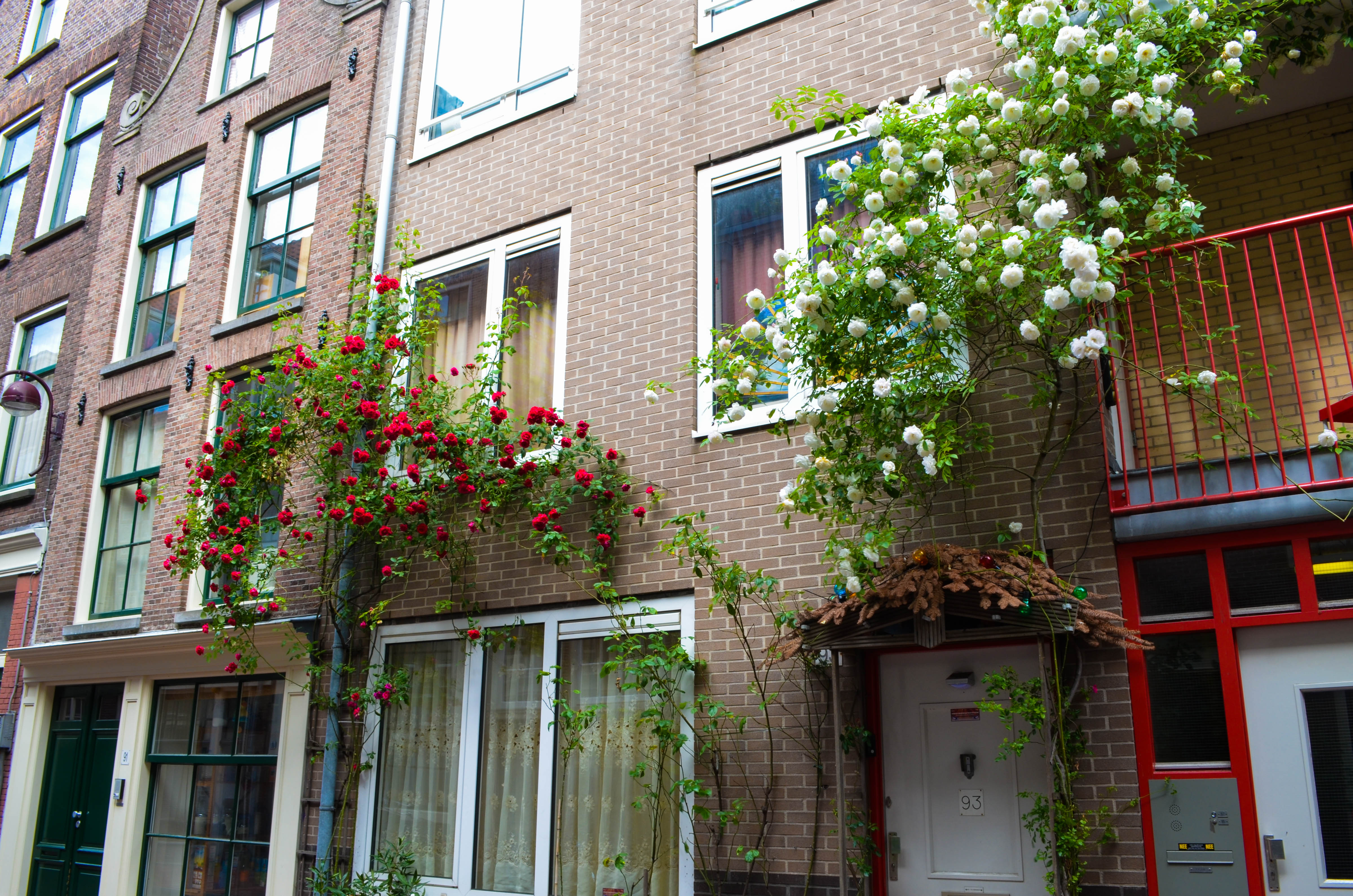 Our Neighborhood in Amsterdam